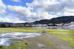 Playa de Sandy cubierta con las pequeñas algas verdes durante marea baja E Imagenes de archivo