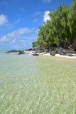 Playa de Sandy de Ile Cerfs aux. Mauricio con la onda rítmica hermosa y los árboles de pino densos Foto de archivo