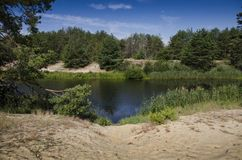Playa de Sandy en el banco de un río del bosque contra la perspectiva de un bosque conífero y de un cielo azul imágenes de archivo libres de regalías