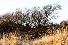 Playa de Sandy en los espinos de Sandscale fotos de archivo libres de regalías