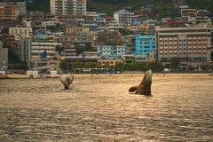 Playa de Songdo Fotos de archivo libres de regalías