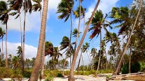Playa de Tanzania almacen de metraje de vídeo