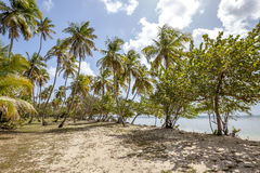 Playa de Trinidad y Tobago Fotografía de archivo