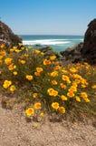 Playa de Tunquen Foto de archivo libre de regalías