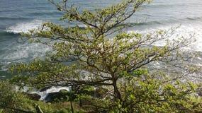 Playa de Varkala Imagenes de archivo