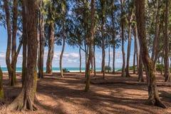 Playa de Waimanalo en Hawaii a través de los árboles de ironwood fotos de archivo libres de regalías