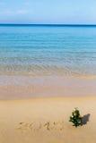 Playa del Año Nuevo, mar, abeto Fotos de archivo