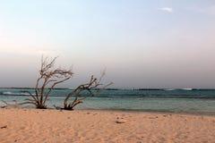 Playa del bebé, Aruba Fotografía de archivo libre de regalías