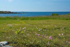 Playa del brezo imagen de archivo libre de regalías