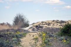 Playa del camino de acceso de las dunas de arena Fotos de archivo libres de regalías