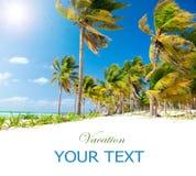 Playa del Caribe. Sun y palmas imagen de archivo