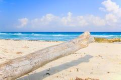 Playa Del Carmen beach, Mexico. Caribbean sea scenery in Playacar ( Playa Del Carmen ), Mexico Royalty Free Stock Images