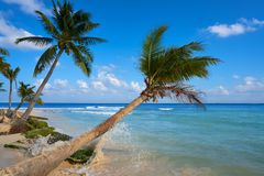 Playa del Carmen beach palm trees Mexico Royalty Free Stock Photo