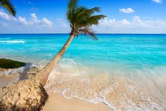 Playa del Carmen beach palm trees Mexico Stock Image