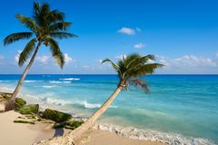 Playa del Carmen beach palm trees Mexico Stock Photo