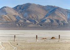 Playa del deserto nel Nevada del Nord Fotografia Stock Libera da Diritti