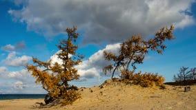 Playa del lago Baikal siberia Cielo azul, nubes móviles, arena, árboles Lapso de tiempo almacen de video