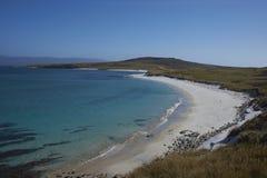 Playa del leopardo - Falkland Islands Imágenes de archivo libres de regalías
