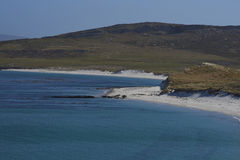 Playa del leopardo - Falkland Islands Foto de archivo