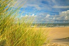 Playa del mar Báltico con la hierba de la playa imágenes de archivo libres de regalías