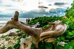 Playa del mar de Radhanagar Imágenes de archivo libres de regalías