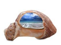 Playa del mar durante marea a través de la cáscara quebrada del rapana Imagen de archivo