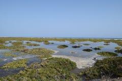 Playa Del Matorral, grąz w Morro Jable, Fuerteventura Obrazy Stock