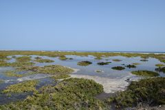 Playa del Matorral, Marshland in Morro Jable, Fuerteventura. Playa del Matorrial, Marshland on the coast in the south of Fuerteventura island, known in Morro stock images