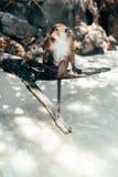 Playa del mono Imagen de archivo libre de regalías