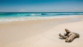Playa del océano con el viejo gancho