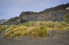 Playa del oro, Oregon Foto de archivo libre de regalías