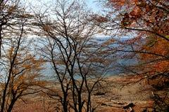 playa del otoño Imagenes de archivo