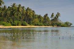 Playa del paraíso de la palmera en la isla del conejo Foto de archivo libre de regalías