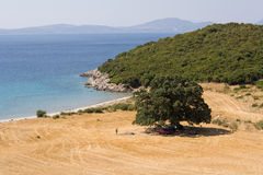 Playa del roble Imagen de archivo