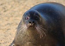 Playa del sello de puerto Foto de archivo libre de regalías
