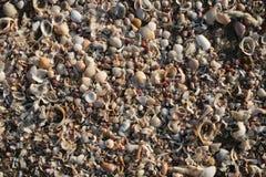 Playa del shell Fotos de archivo libres de regalías