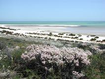 Playa del shell - Australia occidental imagen de archivo