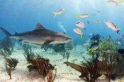 Playa del tigre Imagenes de archivo