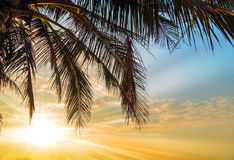 Playa del verano de la palmera del coco Foto de archivo
