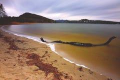 Playa después de una tormenta con madera quebrada del tronco fotografía de archivo libre de regalías