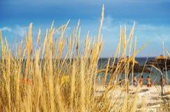 Playa detrás de la duna de grass Foto de archivo