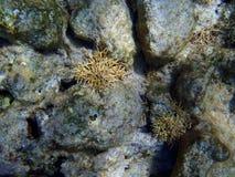 El korala plaża Zdjęcie Royalty Free