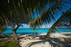 Playa en Bimini que mira las palmas del throungh Foto de archivo libre de regalías