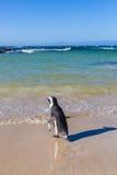 Playa en Cape Town, Suráfrica Imágenes de archivo libres de regalías