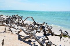 Playa en Cayo JutÃas Fotografía de archivo libre de regalías