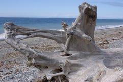 Playa en el refugiado salvaje de la vida de Dungeness Imagen de archivo libre de regalías