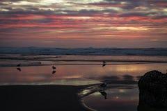 Playa en el sunet con reflexiones y gaviotas Fotografía de archivo libre de regalías