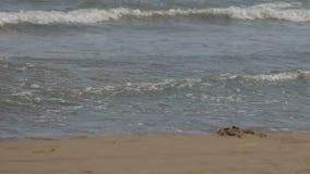 Playa en España, ciudad de Vinaros metrajes