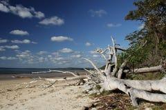Playa en la isla de Fraser Fotos de archivo