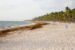 Playa en la República Dominicana imágenes de archivo libres de regalías
